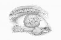 Anasazi Eyes