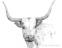 texas-longhornf