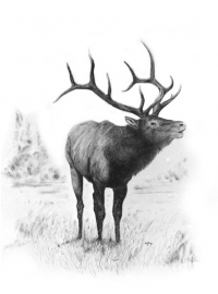 The Royal Elk